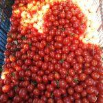 tomates cerises vrac 150x150 - C'est la saison des tomates ! Venez déguster nos produits bio à Vallabrègues